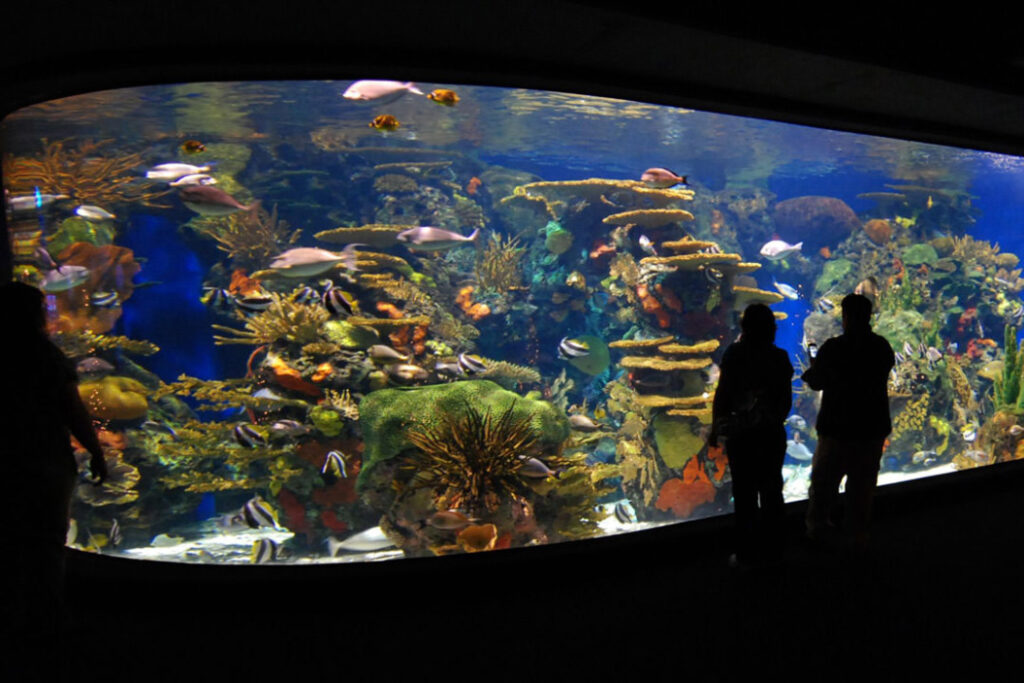 Coujple viewing Ripley's Aquarium