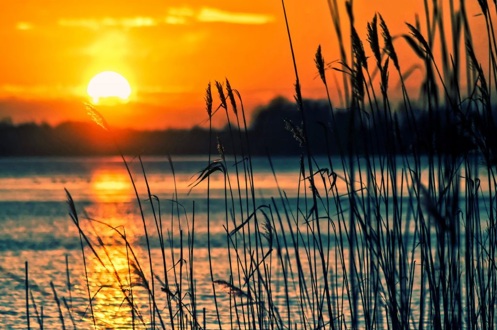 Sunset over cat tails onto lake