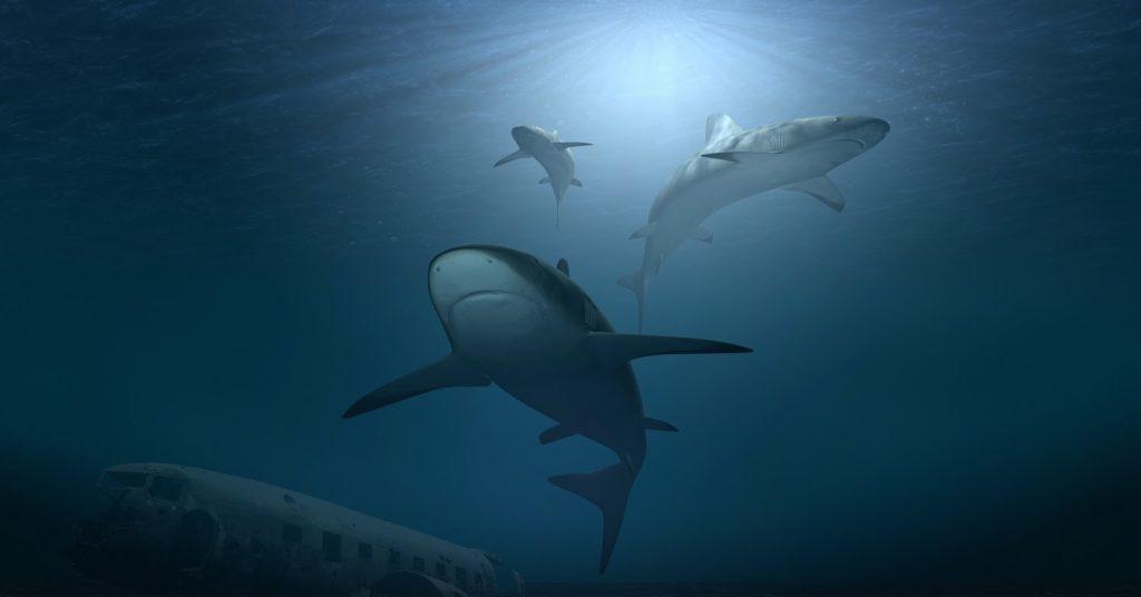 Sharks at RIpley's Aquarium