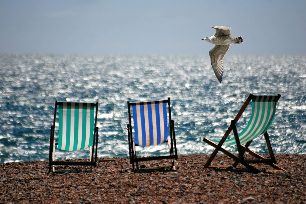 Beach chairs with seagull flying by